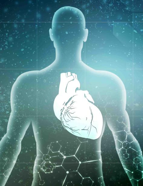 La compañía Biolife4D promete que el órgano tendrá el tamaño y el peso adecuado para la persona que luego recibirá el órgano (vertical-x1)