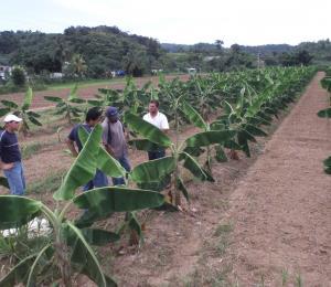 El Censo Agrícola federal se distribuirá en la isla en enero