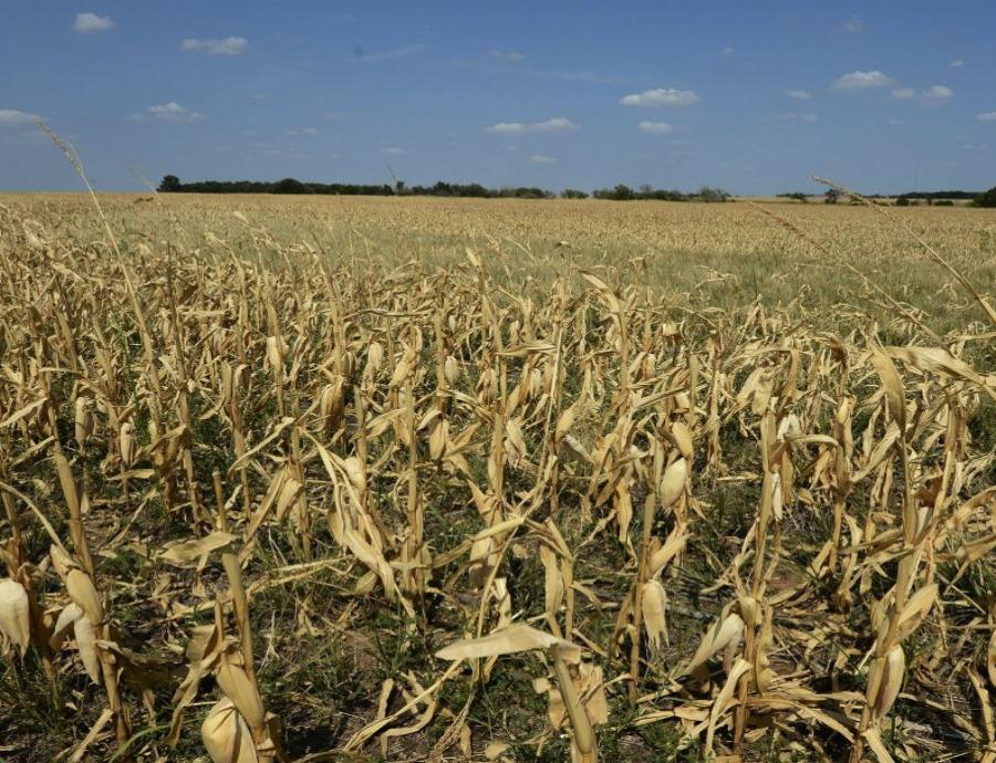 La disponibilidad de muchos alimentos se verá mermada por los cambios en las temperaturas. (EFE) (semisquare-x3)