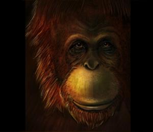 Científicos revelan los misterios del primate más grande que habitó la Tierra
