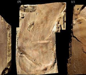 Descubren en China el fósil de una nueva especie nunca antes vista