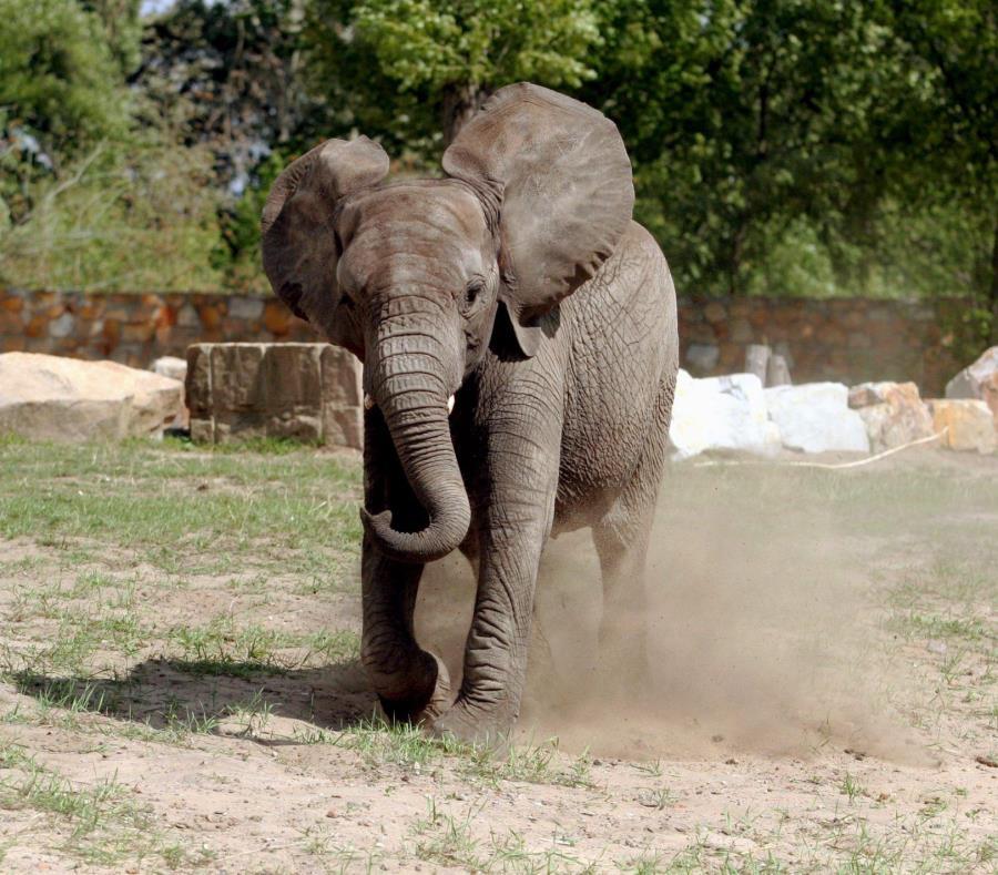 Mujer muere aplastada por un elefante tras acercarse para sacarle una foto