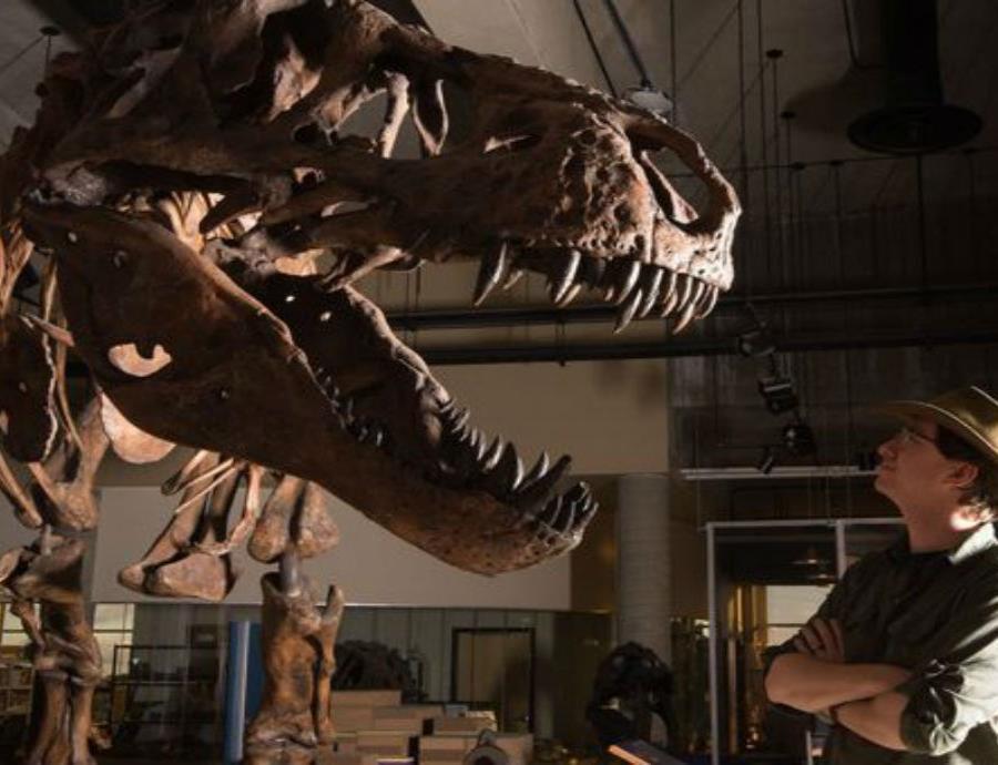 Anuncian el hallazgo de Scotty, el Tiranosaurio Rex más grande del mundo