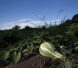 La piedra angular del agro sostenible