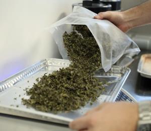 Batallan por incluir el cannabis en el recetario