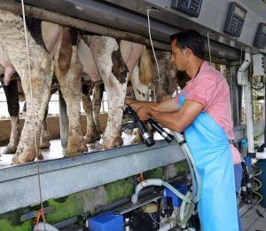 Inyectarán fondos a los lecheros por la baja en ventas sufrida tras los terremotos