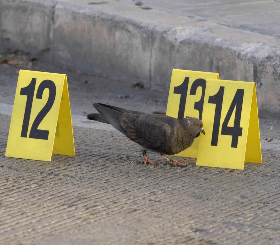 Las autoridades investigan el asesinato. (semisquare-x3)
