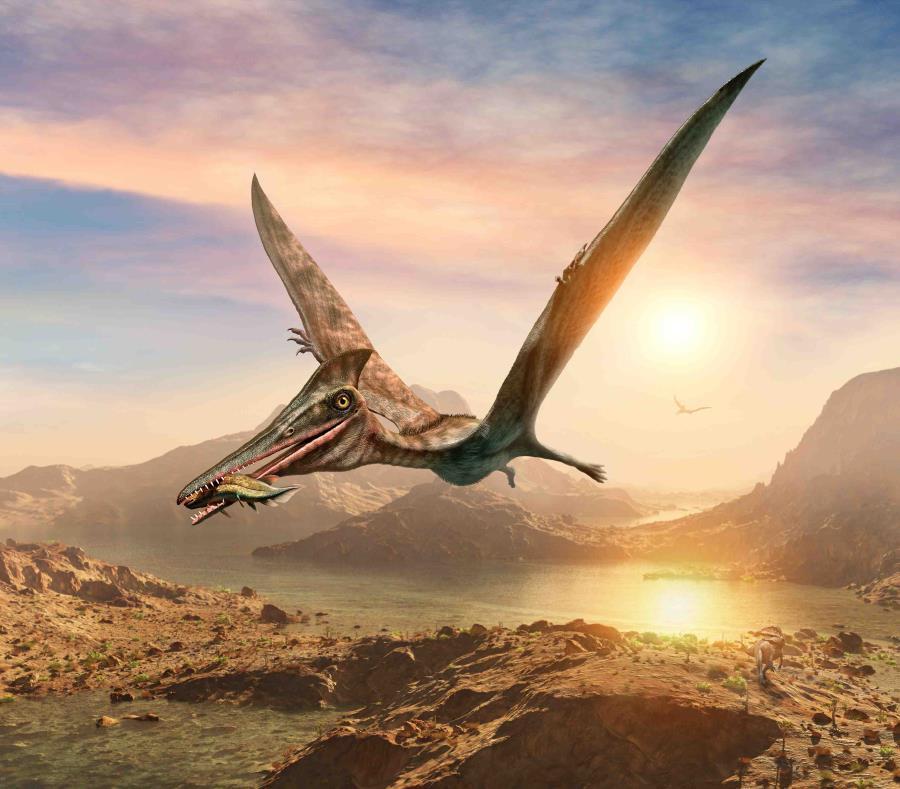Los pterosaurios fueron los primeros vertebrados en conquistar el aire. (Shutterstock) (semisquare-x3)
