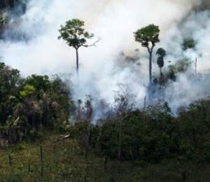 Devastadores incendios consumen el Amazonas a una velocidad récord