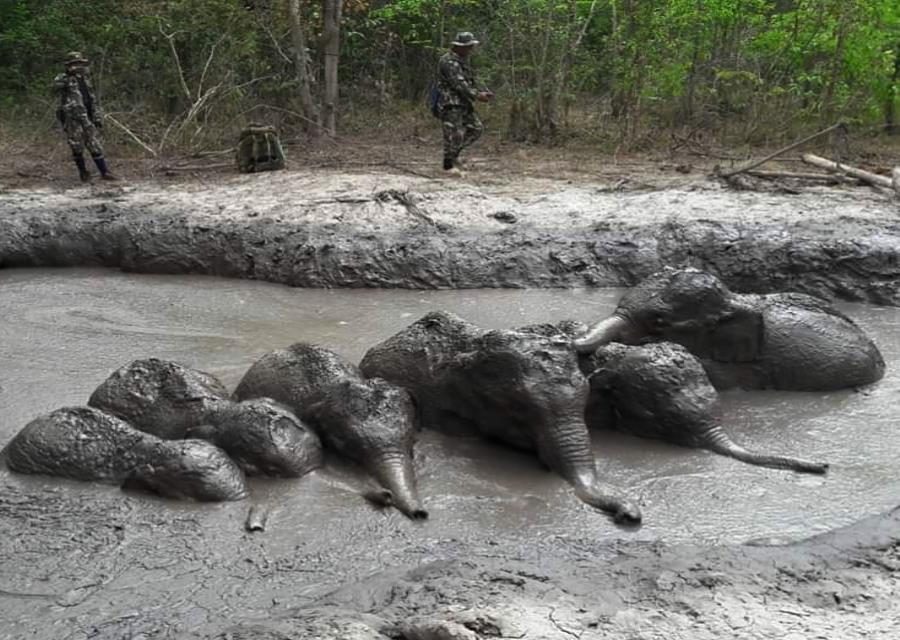En la imagen, los agentes del Parque Nacional Thap Lan se preparan para sacar a los animales. (Departamento de Parques Naturales, Vida Salvaje y Conservación vía AP) (semisquare-x3)