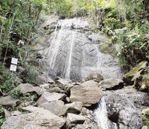 El manejo forestal en la historia de Puerto Rico