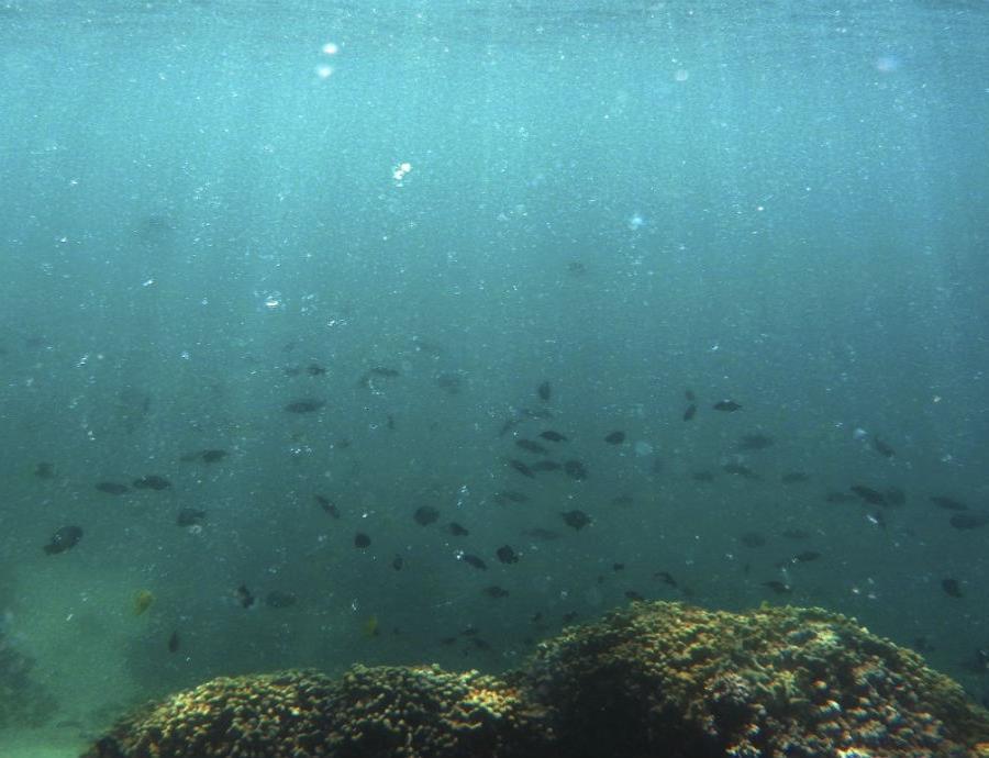 El nivel global del mar podría aumentar casi 50 pies para el año 2300 (semisquare-x3)