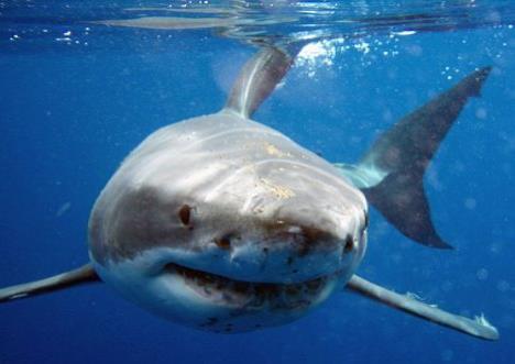 ¡Terrible! Joven estadounidense murió en playa de Bahamas tras ataque de tiburón