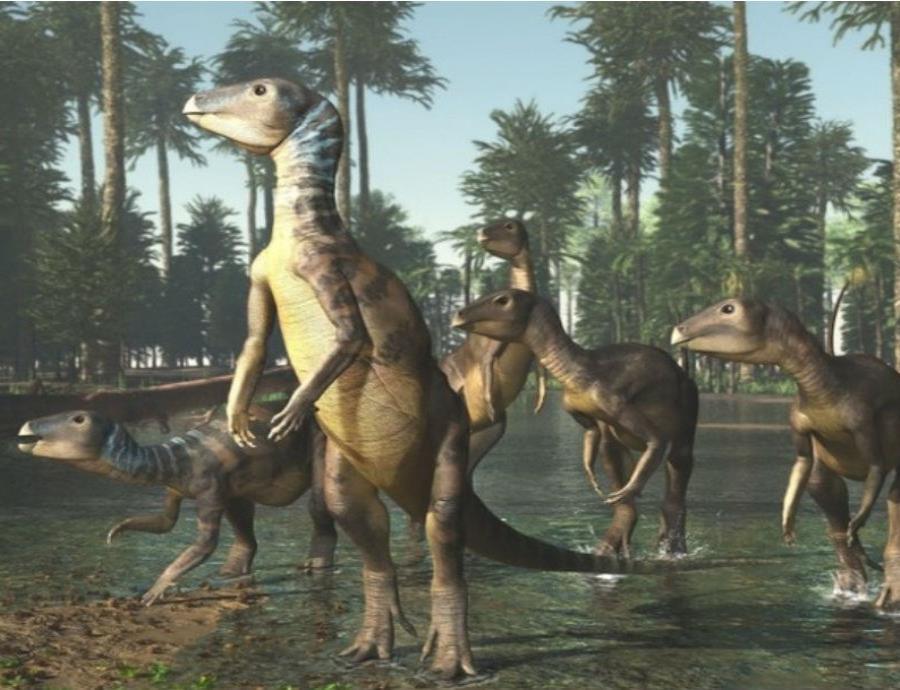Esta nueva especie fue bautizada como Weewarrasaurus (semisquare-x3)