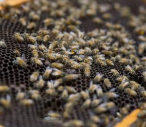 Un anciano de 94 años muere tras ser picado por un enjambre de abejas