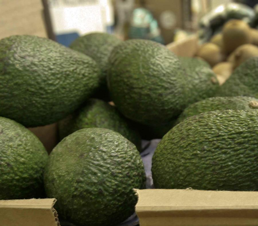 Los aguacates fueron vendidos en California, Arizona, Florida, Wisconsin, Carolina del Norte y Nueva Hampshire. (AP/Paul Sakuma) (semisquare-x3)