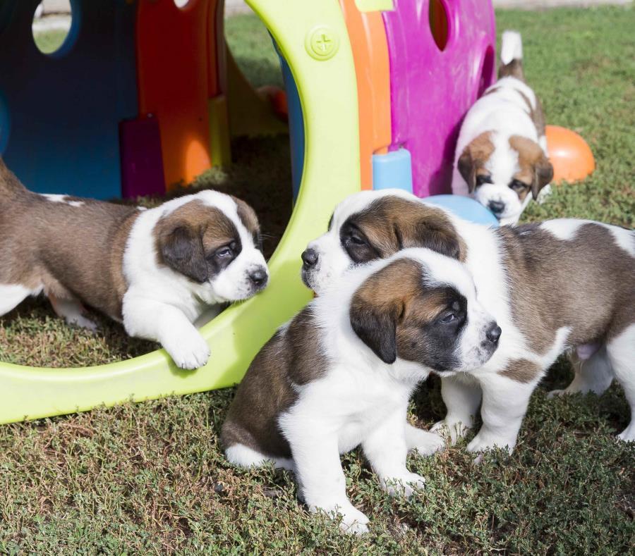 """El gobierno dice que la nueva ley ayudará a acabar con las """"granjas de cachorros"""" (semisquare-x3)"""