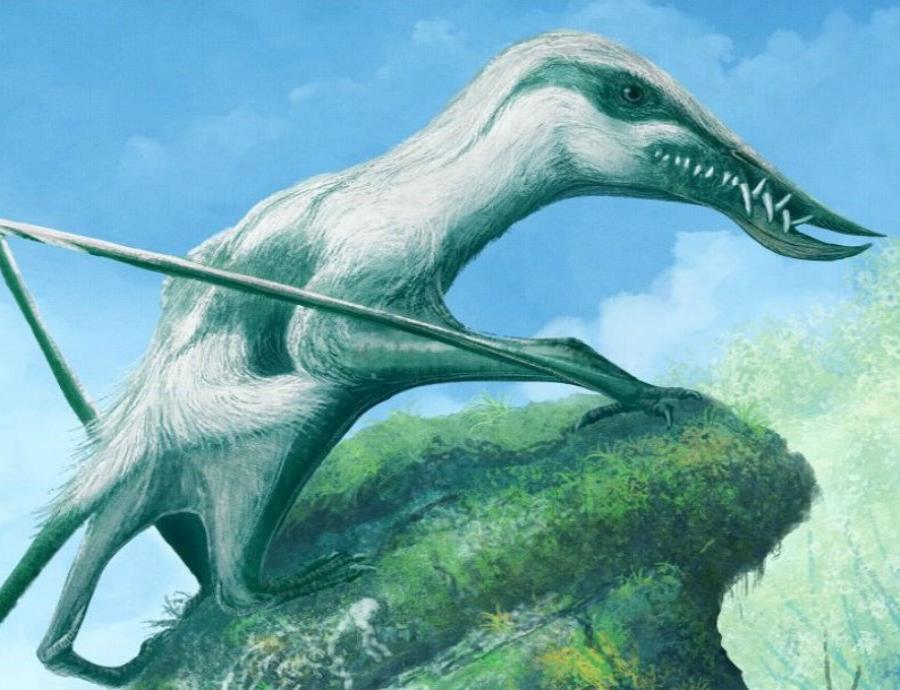 Se estima que esta especie habitó hace 167 millones de años. (semisquare-x3)