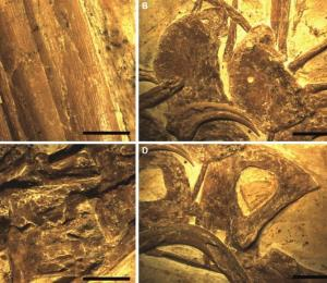 Identifican a una nueva especie de dinosaurio en China