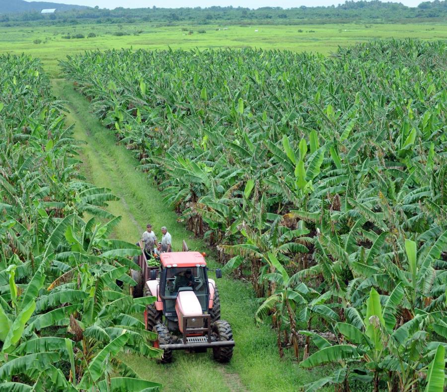 Parte de la información que se espera recoger en el censo por parte de agricultores incluye la cantidad de terreno terreno cultivado y el promedio de ingreso de la finca. (GFR Media) (semisquare-x3)