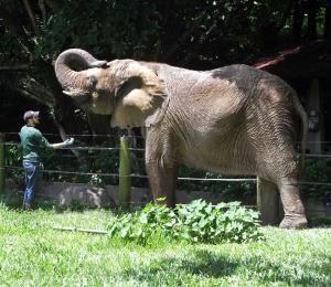 El Zoológico de Mayagüez es víctima de la política
