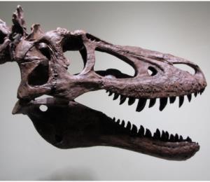 Ponen a la venta el fósil de un tiranosaurio bebé en internet y causa indignación