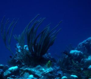 Los hongos marinos y su importancia ecológica