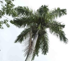 La sorprendente resistencia de la flora nativa