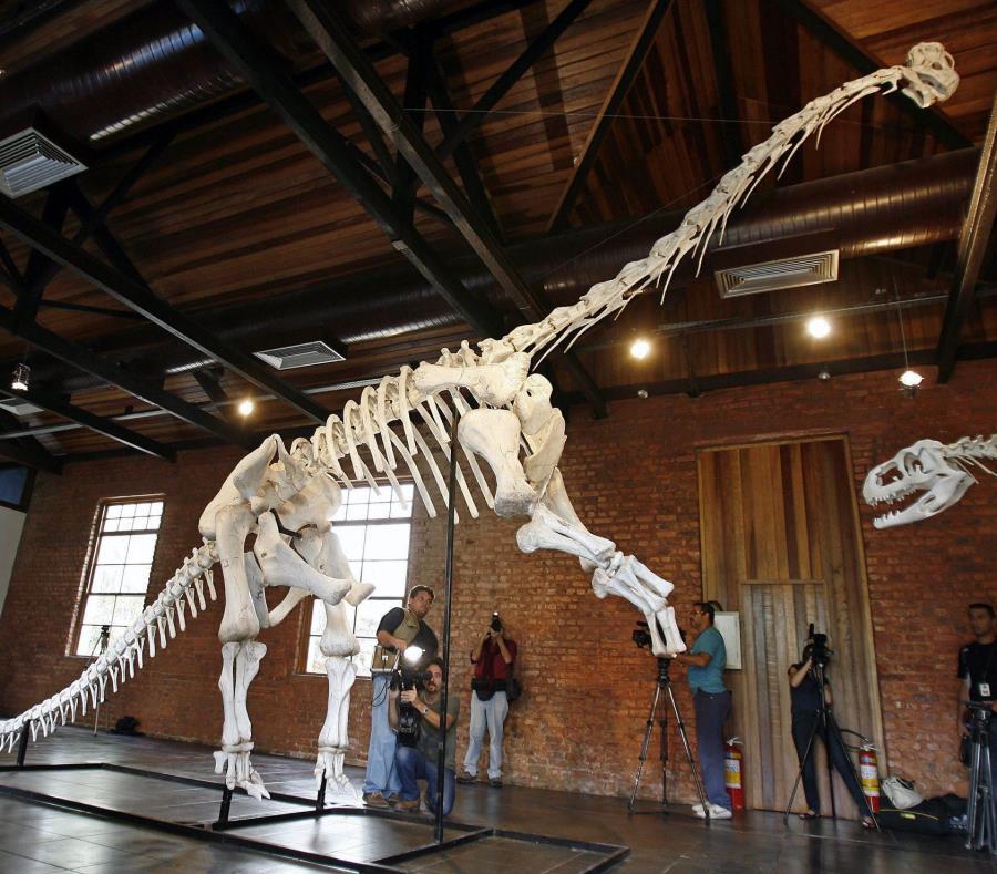 Al contrario de sus sucesores, los primeros dinosaurios de la familia de los Diplodocus o los Braquiosauros eran pequeños y tenían únicamente dos patas. (EFE / Antonio Lacerda) (semisquare-x3)