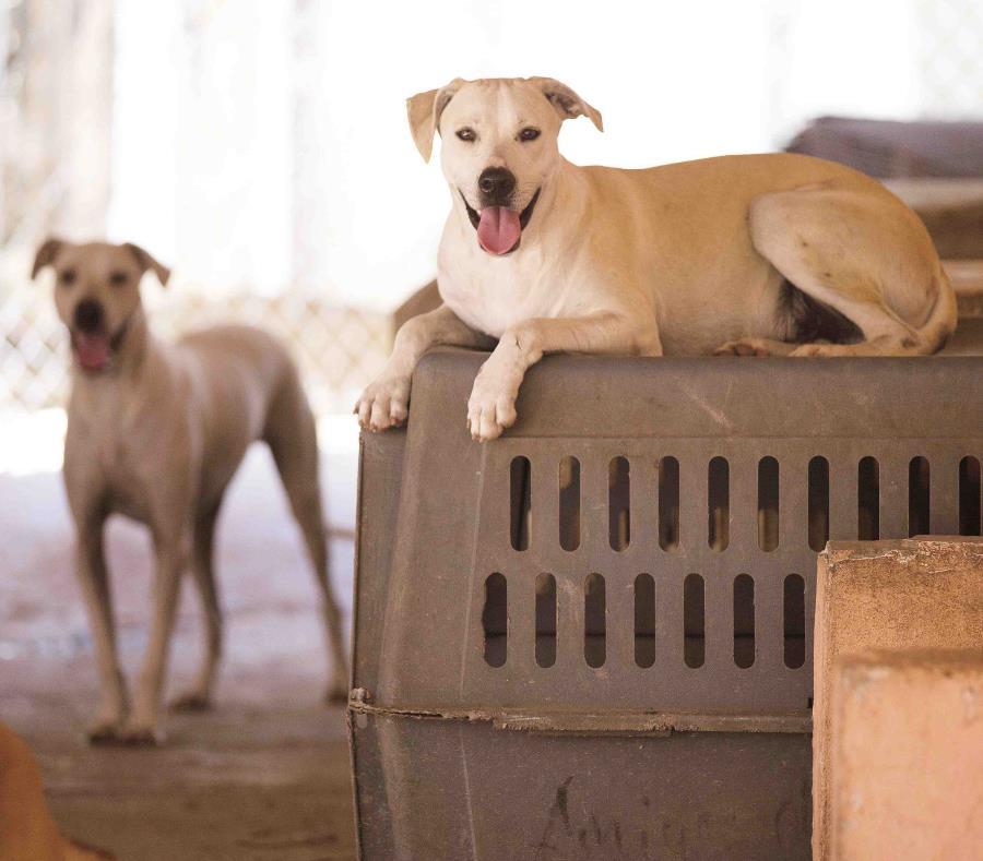 Al hombre le sobrevivieron cinco perros de los 12 que tenía (semisquare-x3)