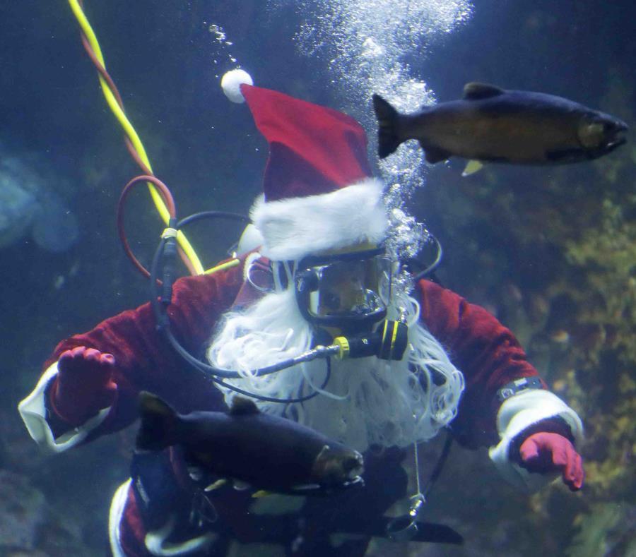 Santa Claus en el acuario. (AP) (semisquare-x3)