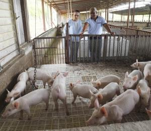 Promueven carne de cerdo producida por cooperativa de porcicultores