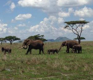 Roger Casement: Memoria de África