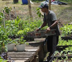 Agroecología: apuesta para tiempos de crisis y el futuro
