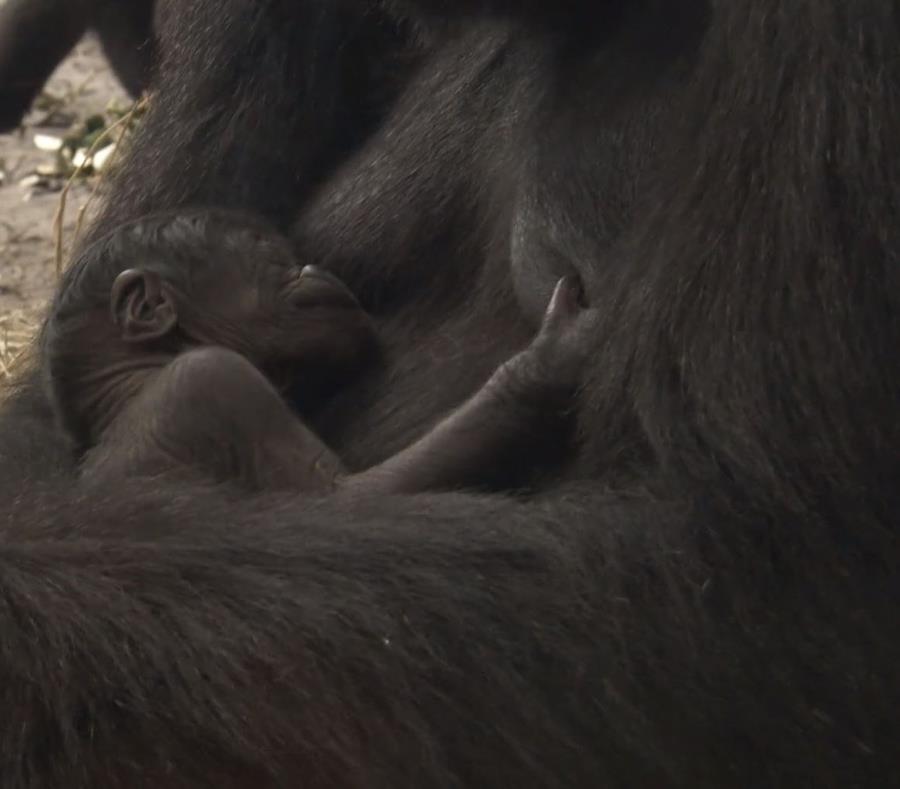 La criatura duerme en los brazos de su mamá, Kashata. (Captura de video/ Vimeo) (semisquare-x3)