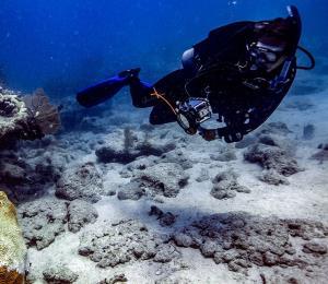 Presentan una medida para declarar los arrecifes de coral como una estructura esencial en la isla