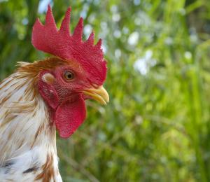 ¿En qué cabeza de gallo cabe esto?