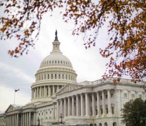 Los cangrimanes de Washington
