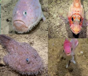 Nuestro océano profundo