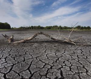 La pérdida de humedales es la mayor amenaza para aves migratorias