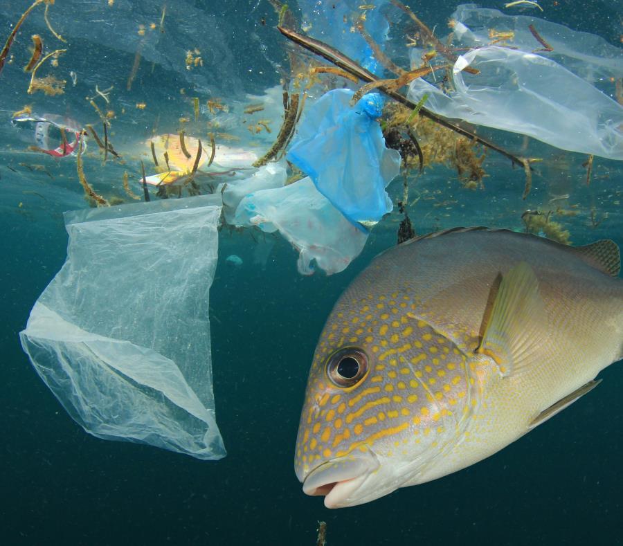 Se le considera a los microplásticos como una nueva modalidad de contaminación. (Shutterstock) (semisquare-x3)