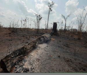 Los incendios del Amazonas también afectan a Puerto Rico
