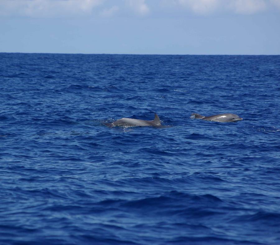 Hallan dos delfines muertos con graves heridas de bala y cuchillo