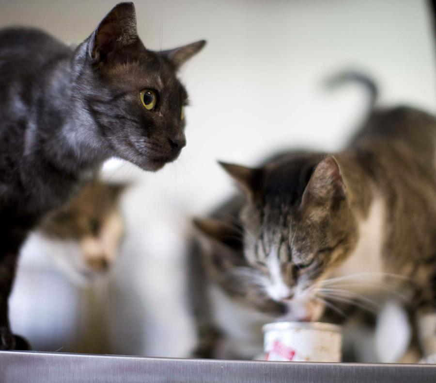 El gato estaba a las afueras del cuartel cuando el agente salió a botar la basura (semisquare-x3)
