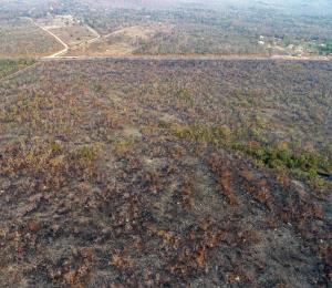 Selva en llamas: un daño irreversible a la humanidad
