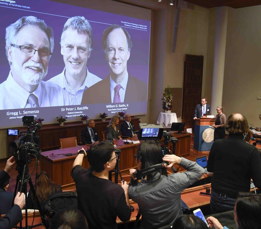 Nobel para descubridores del sensor de oxígeno celular