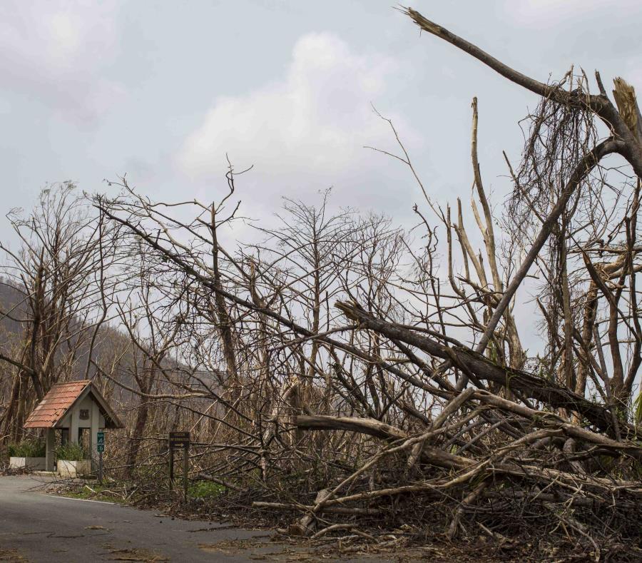 El bosque nacional El Yunque fue una de las zonas más afectadas tras el huracán María (semisquare-x3)