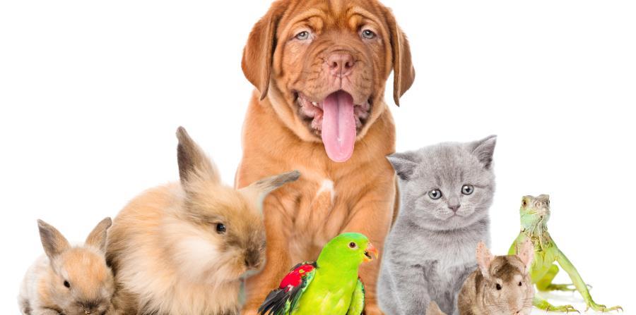 Por lo general, las personas gastan entre 1% y 3% de su ingreso anual en el cuidado de sus mascotas, según estimados. (horizontal-x3)