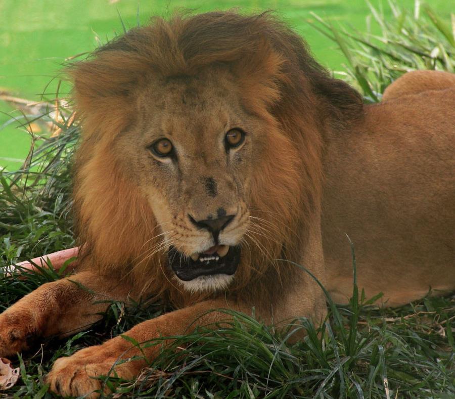 El cazador explicó no tener remordimiento alguno por haber asesinado a más de 70 animales. (semisquare-x3)