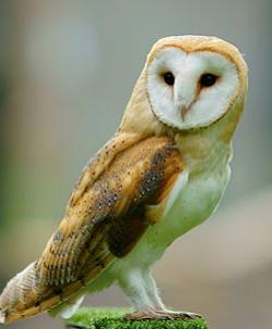 En puerto rico famosa especie de ave el nuevo d a - Nacionalidad de puerto rico en ingles ...